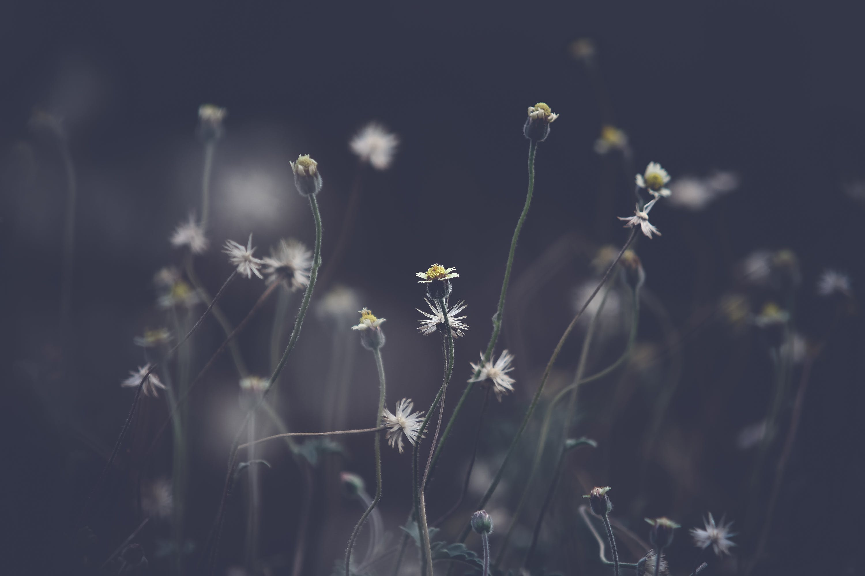 Grayscale Photo of Petaled Flowers