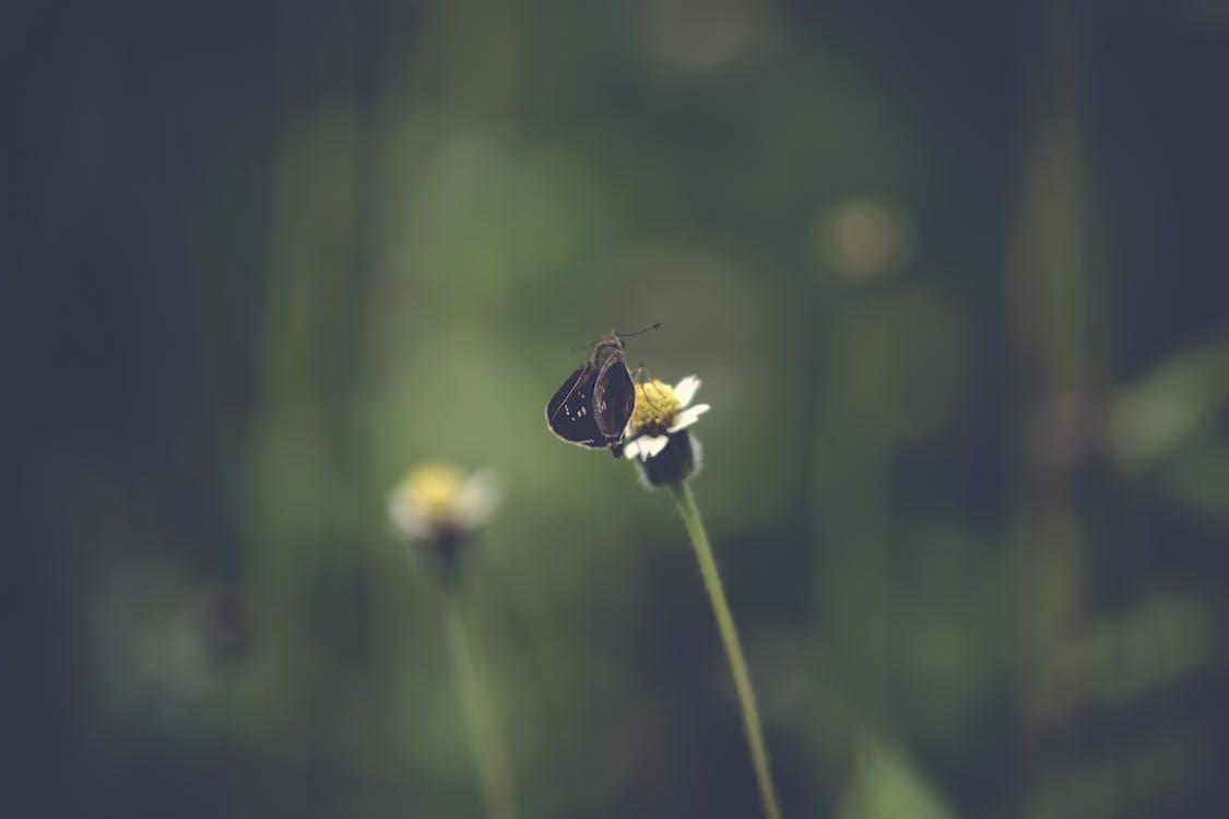 增長, 夏天, 夏季 的 免费素材图片