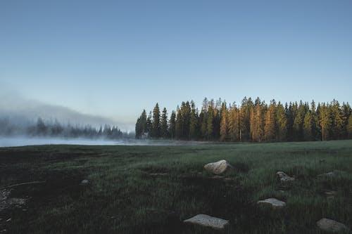 경치, 나무, 맑은 하늘, 바위의 무료 스톡 사진