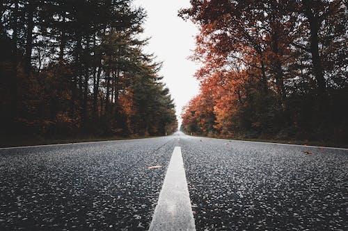 Fotobanka sbezplatnými fotkami na tému 4k tapety, asfalt, borovice, cesta