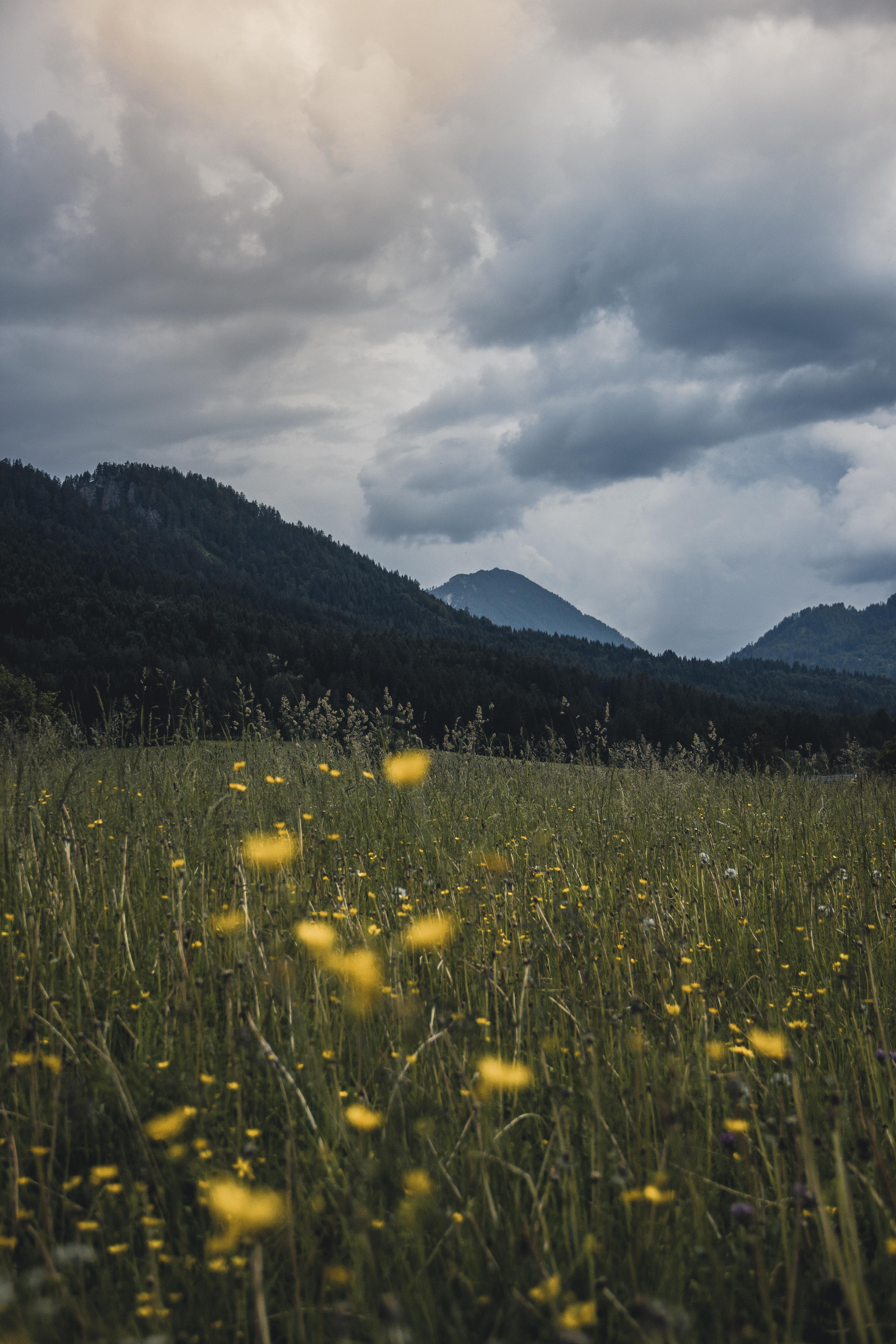 Photo of Flower Field Near Mountains