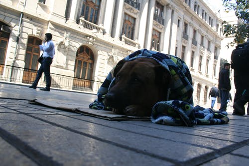 Free stock photo of animal lover, chile, city center, dog