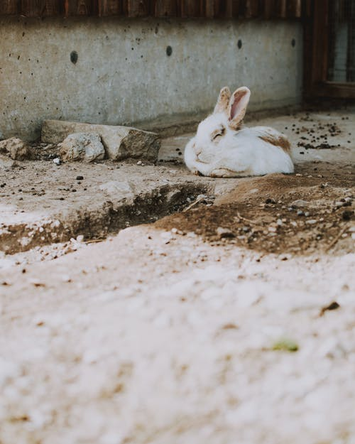 うさぎの耳, うそ, ぼかし, ウサギの無料の写真素材