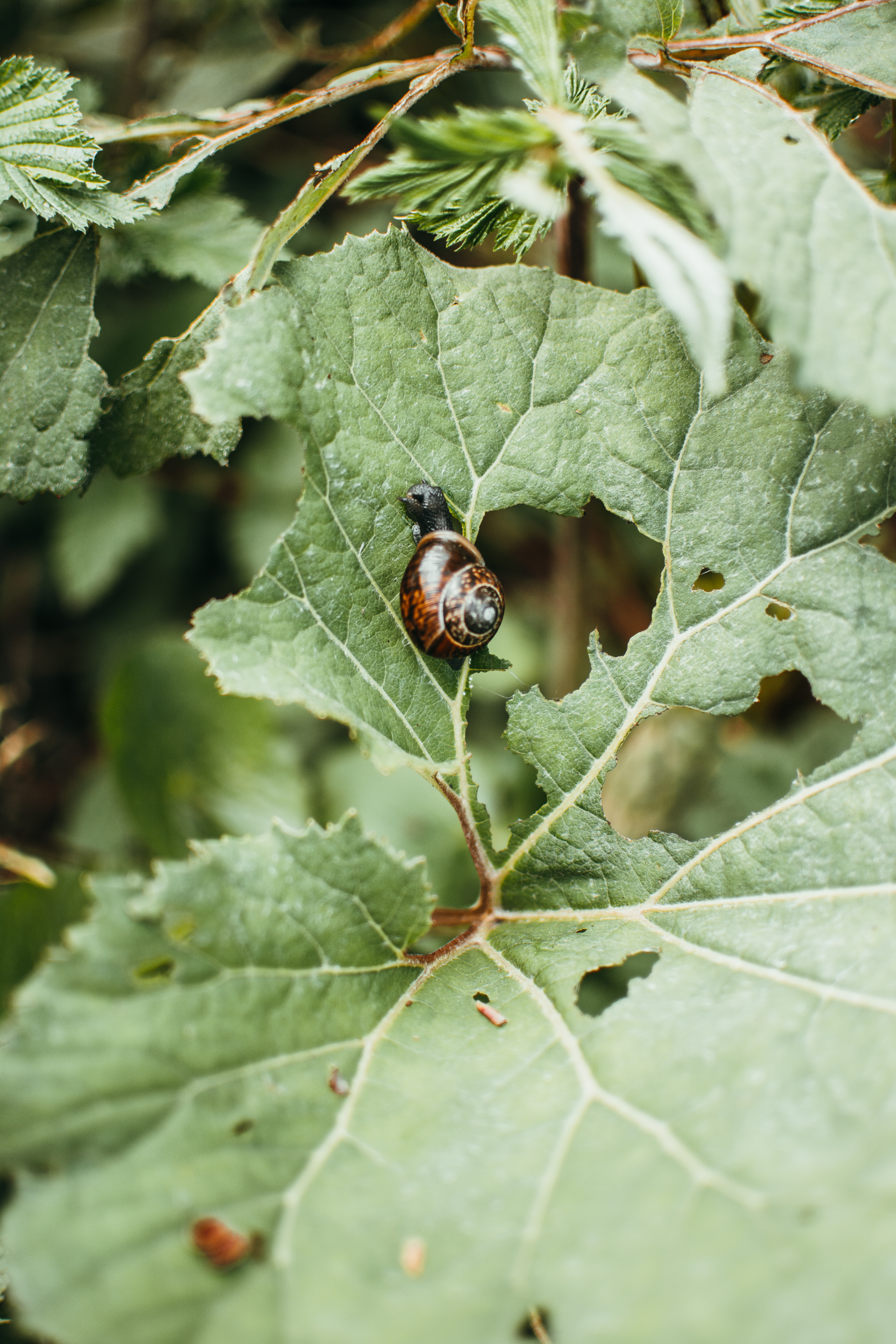 Close-Up Photo of Snail on Leaf Plant