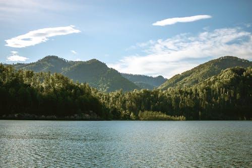 Imagine de stoc gratuită din apă, apă curgătoare, apus, arbori