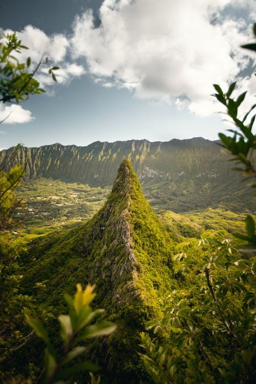 Immagine gratuita di albero, avventura, collina, erba