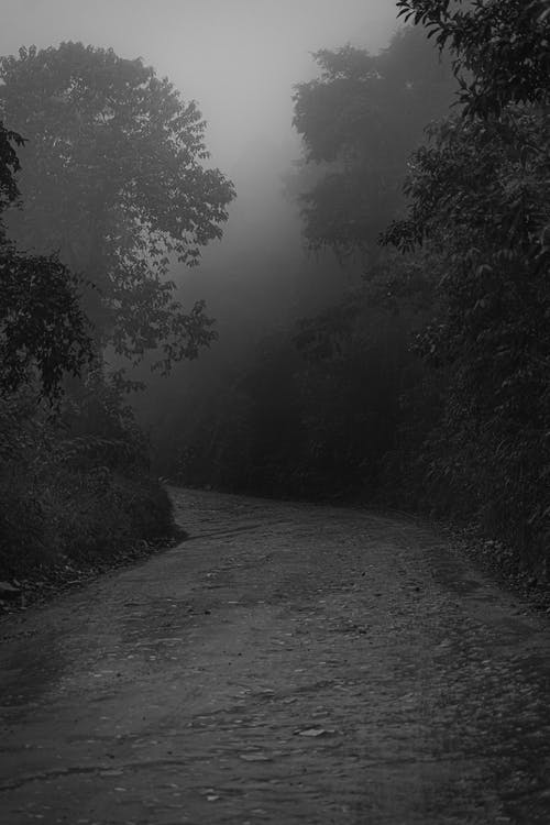 Grayscale Photography of Pathway Between Trees
