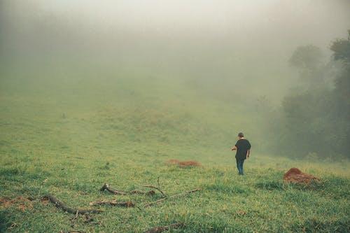 Kostnadsfri bild av dagsljus, dimma, dimmig, fält