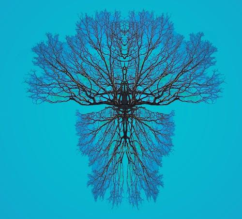 ağaç, Ağaç dalları, ahşap, boya içeren Ücretsiz stok fotoğraf