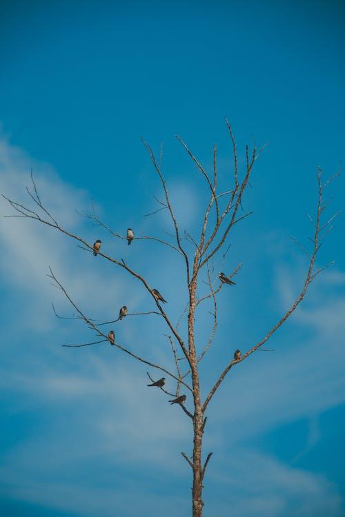 Безкоштовне стокове фото на тему «блакитне небо, гілки дерев, голі дерева, птахи»