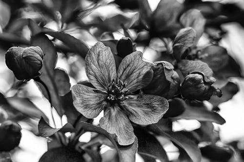 Free stock photo of black and white, Black and white flowers