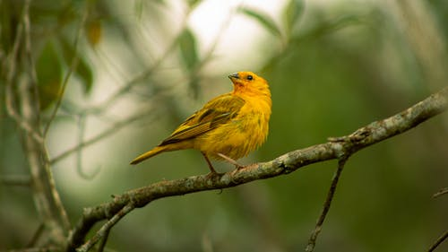 Close-Up Photo Of Yellow Bird Perched On Branch