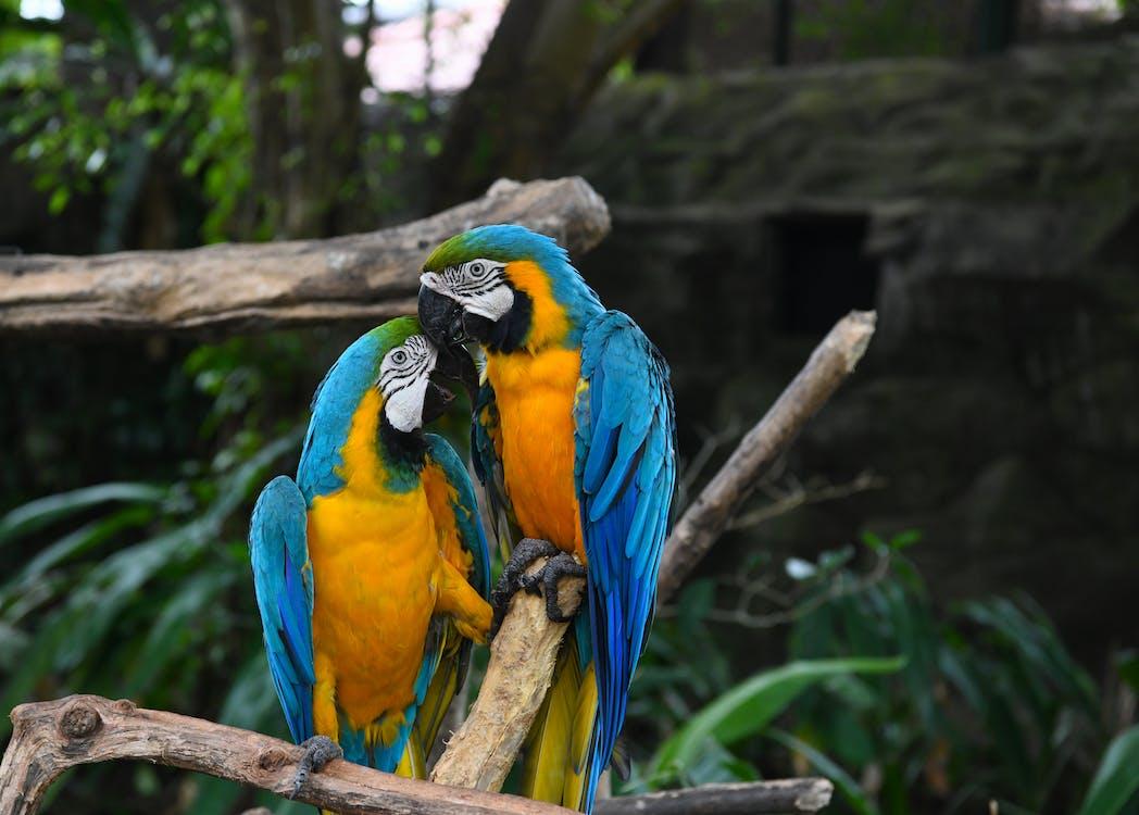 állatbarát, állatkert, együtt