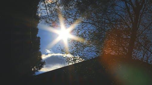 Foto d'estoc gratuïta de arbre, branques, centellegi del sol, sol