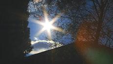 sun, silhouette, branches