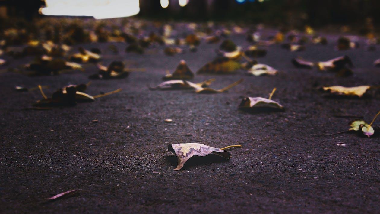 asfalt, blade, dybde
