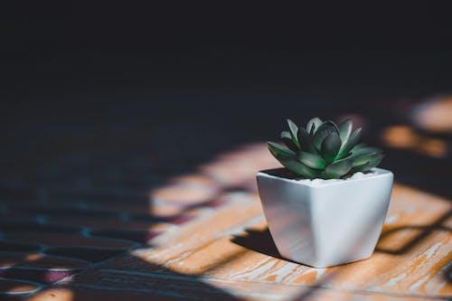 Foto d'estoc gratuïta de artificial, blanc, càmera Nikon