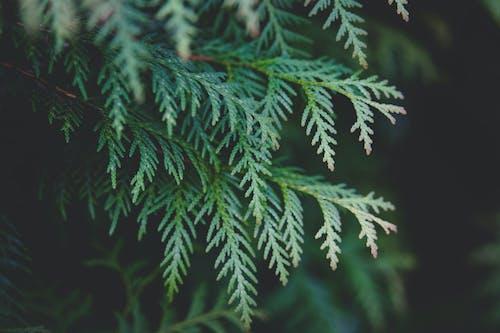 Foto profissional grátis de close, ecológico, planta, samambaia
