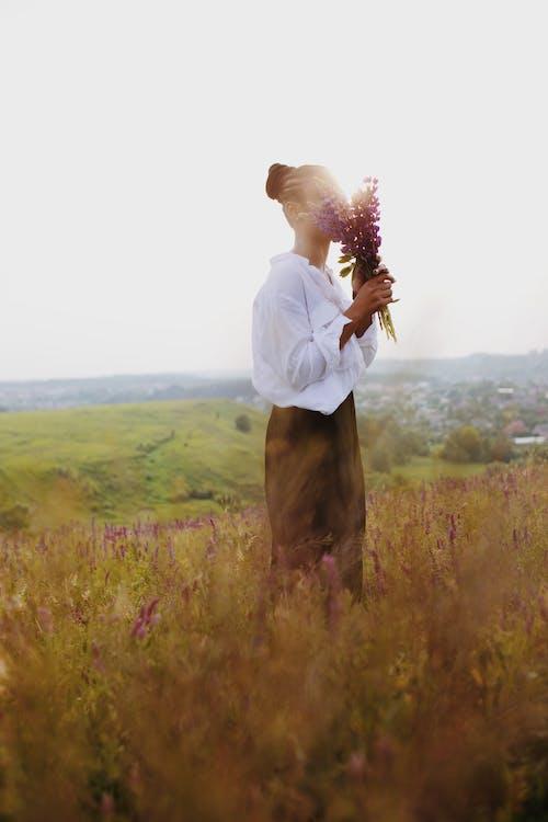 Ảnh lưu trữ miễn phí về ánh sáng ban ngày, ánh sáng mặt trời, cánh đồng hoa, chụp ảnh