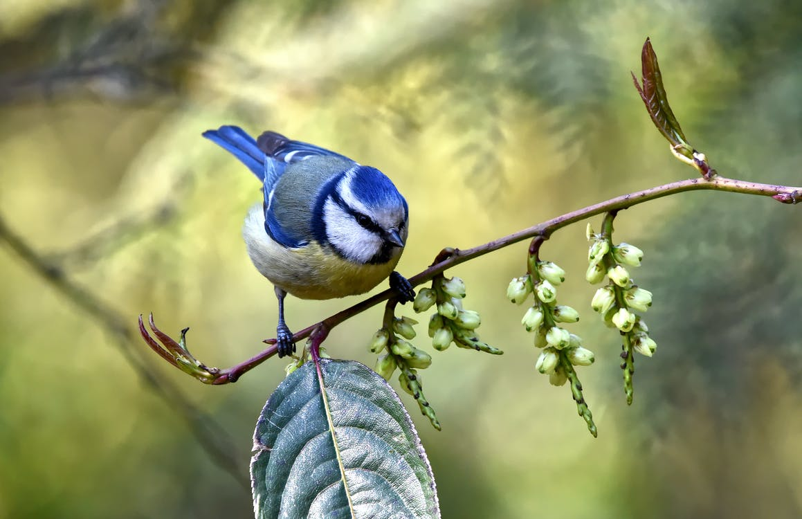Close-Up Photo of Blue Bird Perched On Branch