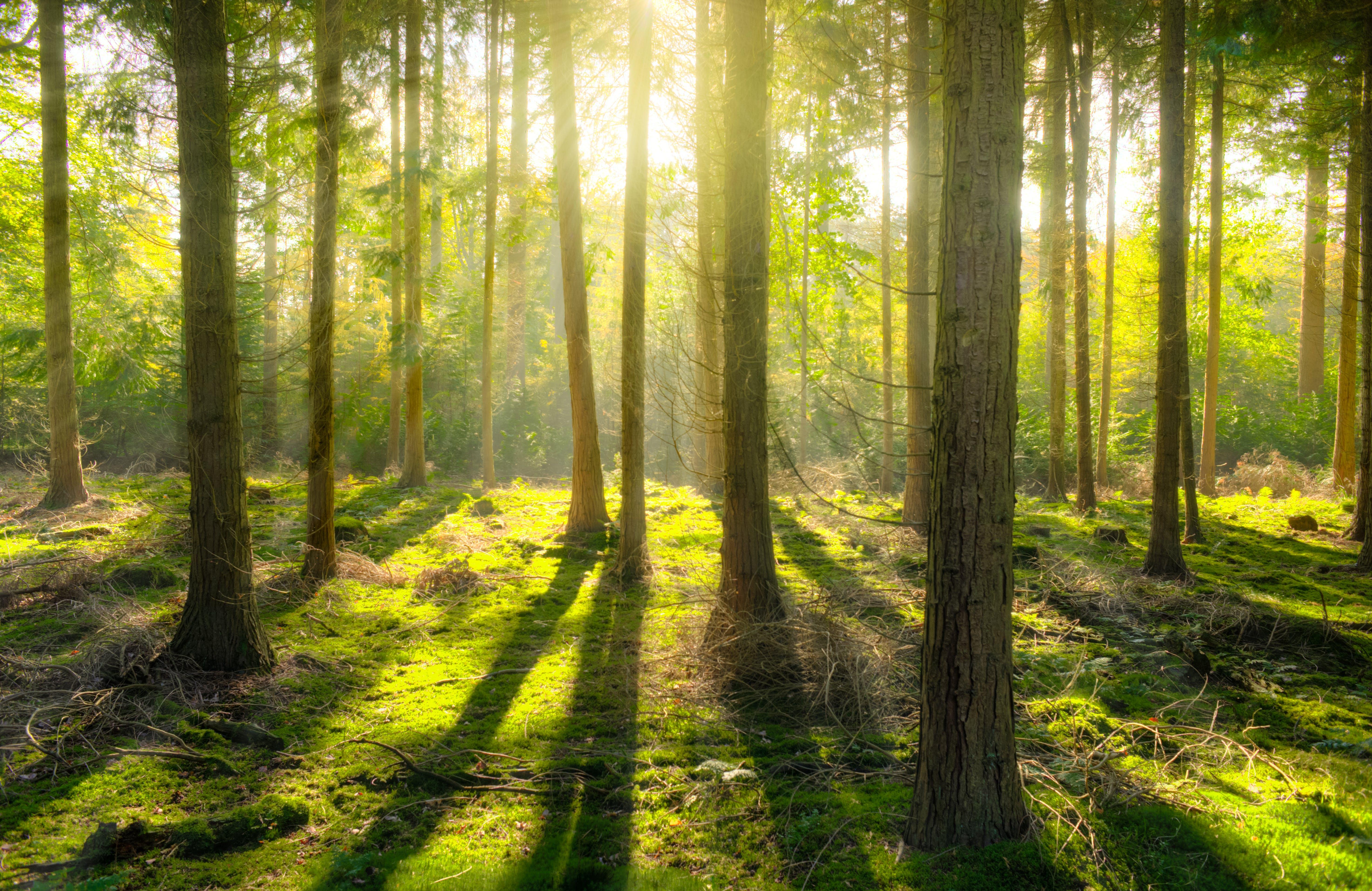 Kostenloses Stock Foto zu bäume, baumstamm, beratung, gras