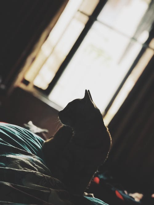 Photo of Cat Sitting On Bed