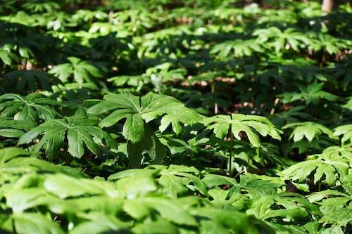 Foto stok gratis alam, Daun-daun, hijau, musim semi