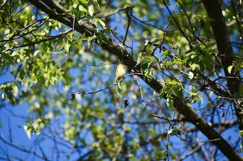 Foto stok gratis burung, pohon, sping