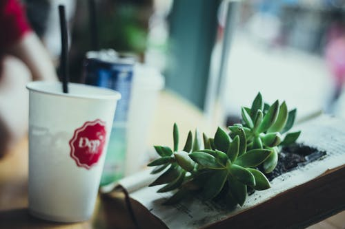 Ilmainen kuvapankkikuva tunnisteilla aurinko, kahvi, kevyt, kuppi
