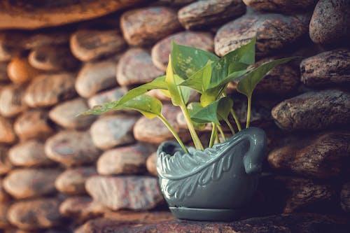 Ilmainen kuvapankkikuva tunnisteilla amerikkalainen vihreä puu sammakko, auringonlasku, kahvi, kuppi