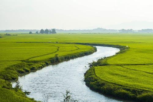 Ilmainen kuvapankkikuva tunnisteilla lanscape, luonto, maa, riisi