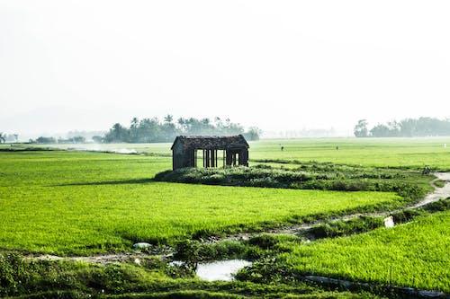 Ilmainen kuvapankkikuva tunnisteilla lanscap, maantie, riisi