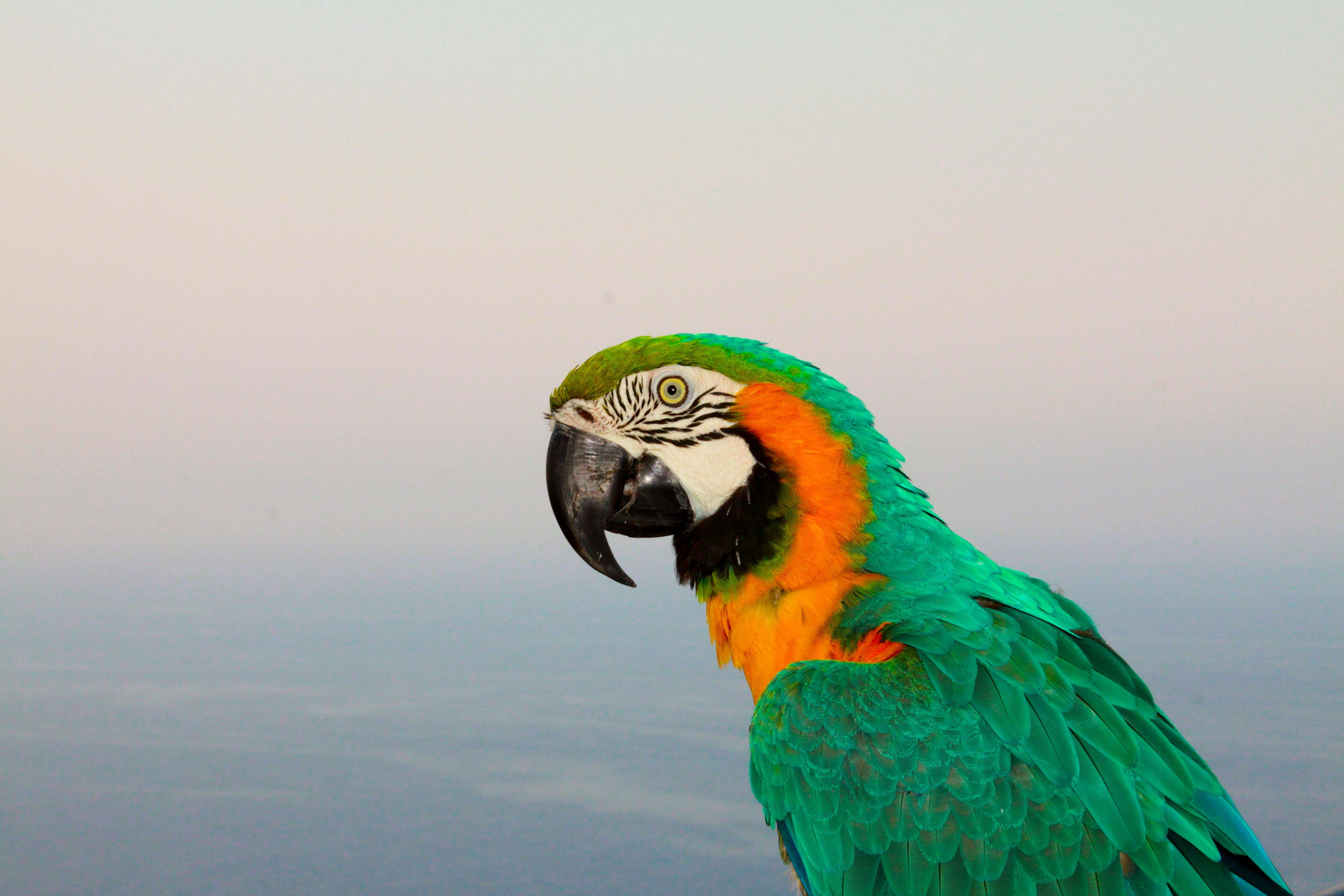 Selective Focus Photography of Macaw