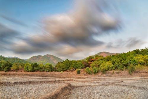 Foto stok gratis alam, hijau, long exposure, tanah