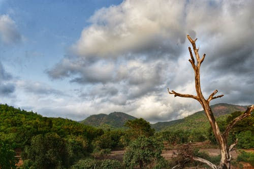 Foto stok gratis alam, awan, gunung, hijau