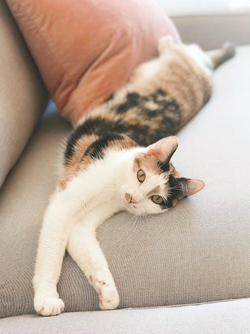 休息, 伸展, 動物, 印花布 的 免费素材照片