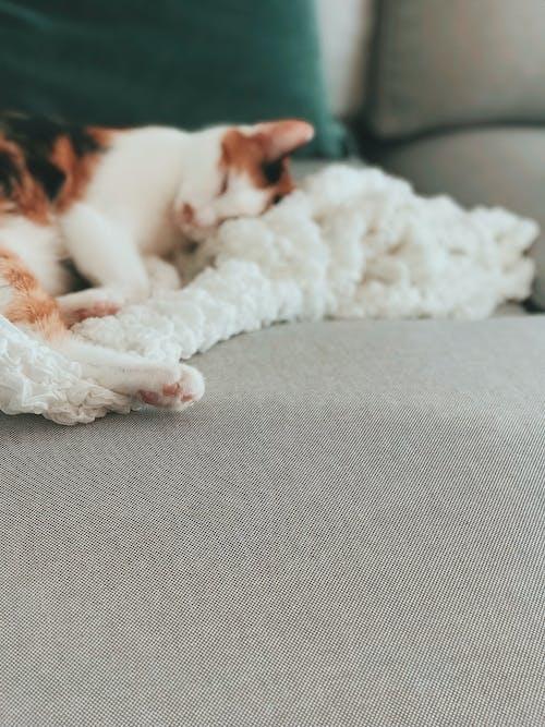 Evcil Hayvan, hayvan, kanepe, kedi içeren Ücretsiz stok fotoğraf