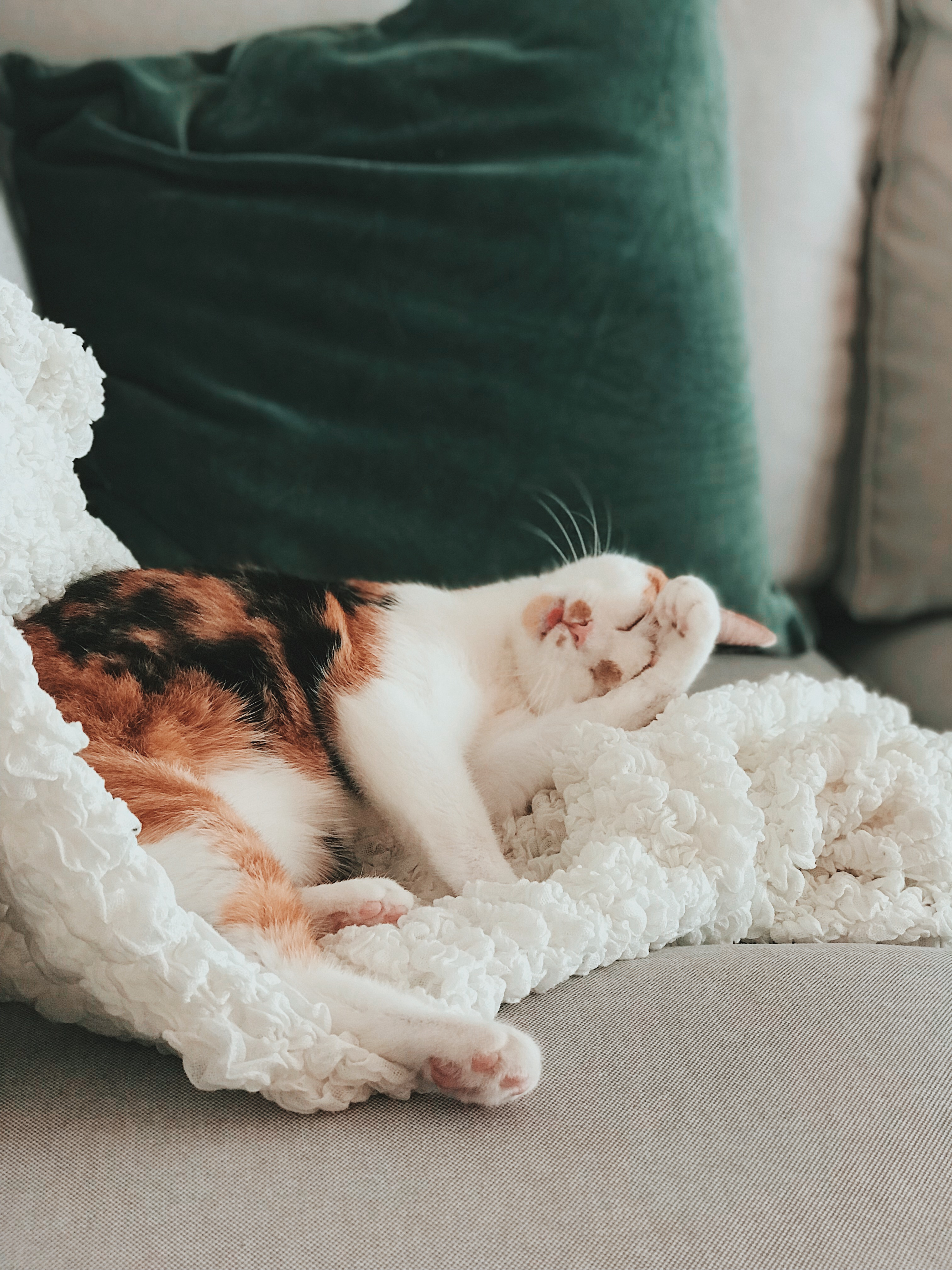 Cat Sleeping on Cushion
