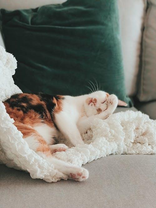 休息, 動物, 動物攝影, 印花布 的 免费素材照片