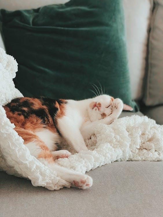 avslappning, bebis, bekväm