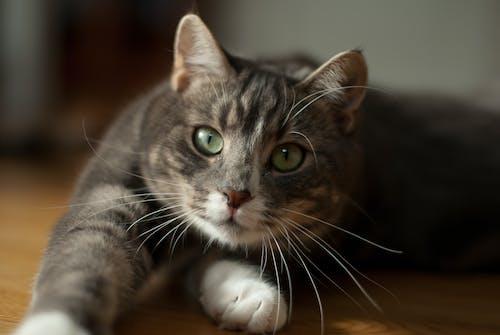 Fotobanka sbezplatnými fotkami na tému bábätko, cicavec, detailný záber, domáce zviera