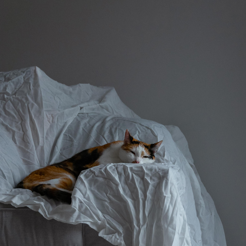 Short-fur Orange, White, and Black Cat Lying on White Textile