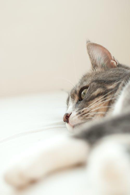 Gratis lagerfoto af afslapning, baby, behåret, dyr