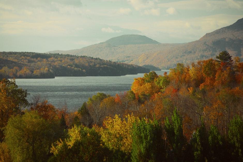 fall, forest, HD wallpaper