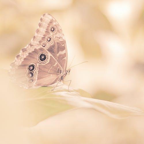 Fotobanka sbezplatnými fotkami na tému chrobák, detail, hmyz, krídla