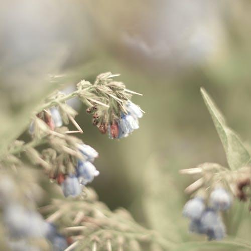Fotobanka sbezplatnými fotkami na tému detail, kvety, makro, príroda