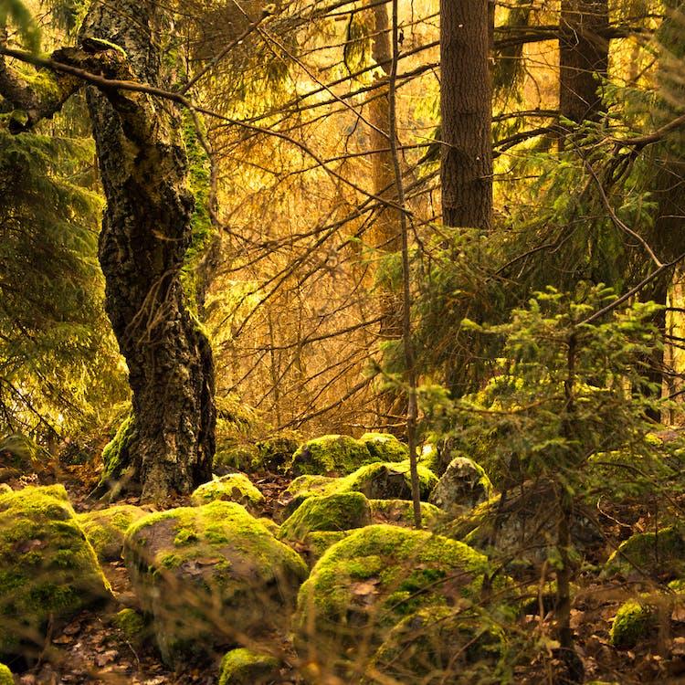 スウェーデン, 古い, 岩