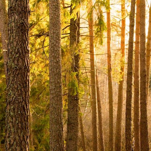 Fotobanka sbezplatnými fotkami na tému slnečné svetlo, slnečný, stromy, Švédsko