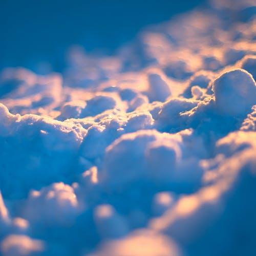 Fotobanka sbezplatnými fotkami na tému detail, makro, modrá, sneh
