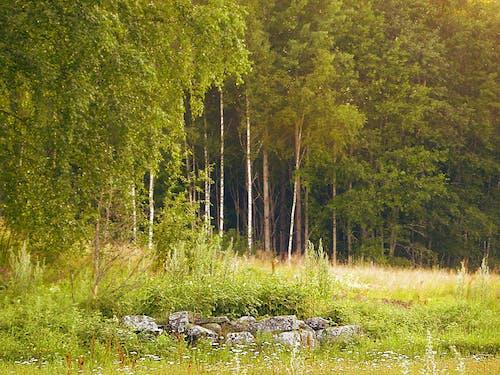 Fotobanka sbezplatnými fotkami na tému krajina, príroda, skaly, Švédsko